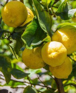 acquista limoni