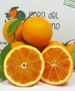 arancia tarocco di sicilia
