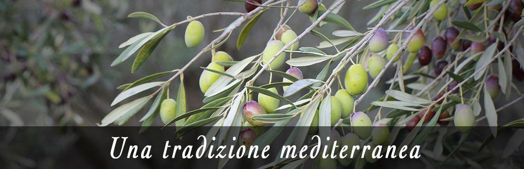 piantagioni di olive