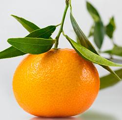 vendita clementine online