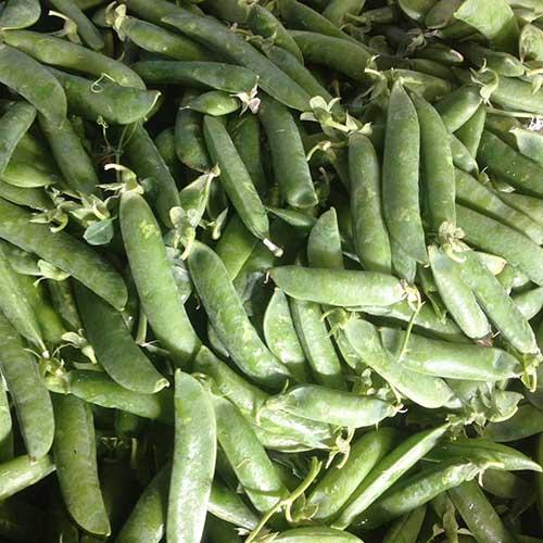 vendita online verdura