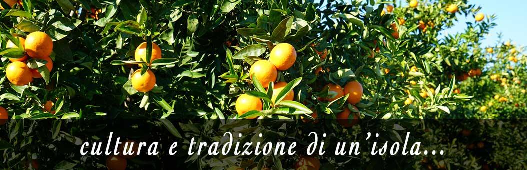 piantagione di arance tarocco di sicilia
