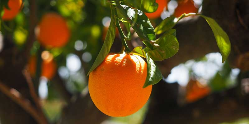 arance di sicilia vendita on line